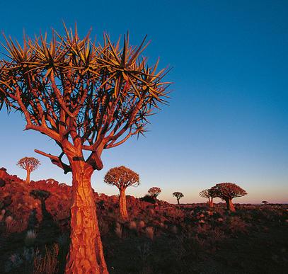 Von den Victoria-Fällen in die Kalahari-Wüste