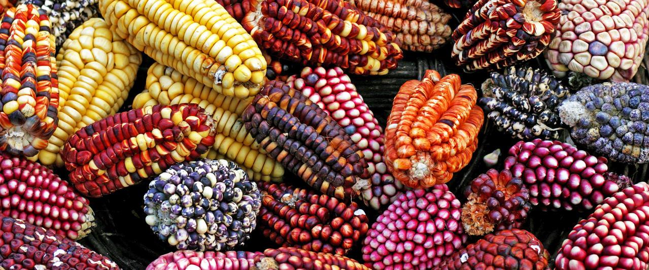 Verführerisches Peru ─ Eine kulinarische Reise