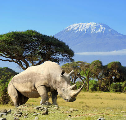 Endlose Savannen am Fuße des Kilimanjaro